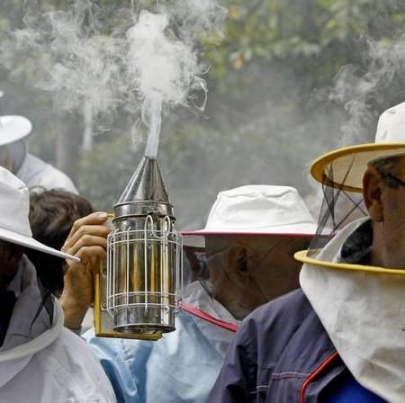 apicultura-lavozdegalicia-abejas