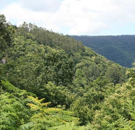 montegalicia-greenpece-certificacion